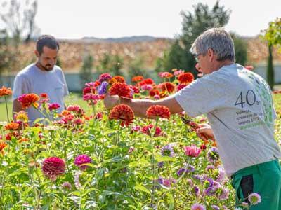 Deux collaborateurs de l'entreprise Valente réalisant l'entretien d'un jardin.